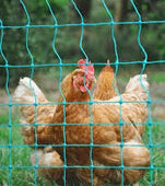 25m Non-Electrified Poultry Fence/Net (Avail late Jan)