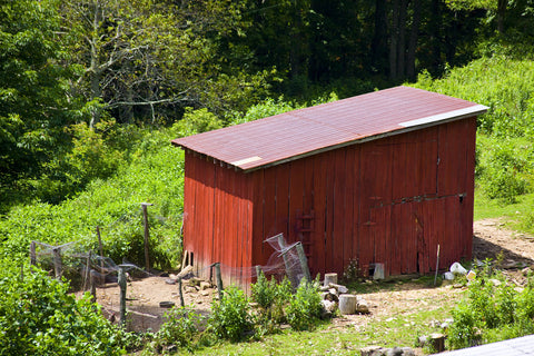 Chicken Barn in Summer