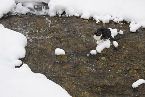 Cristabell sits on snow in creek