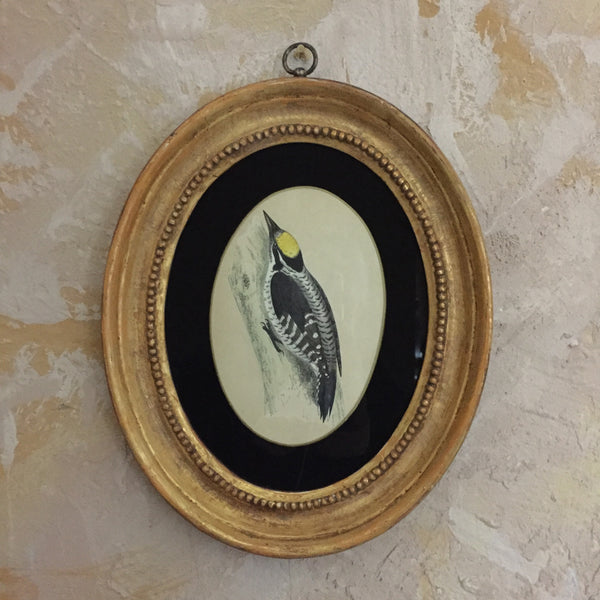 Collections Of Framed Bird Engravings