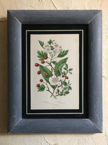 A Set Of Six Framed Botanical's