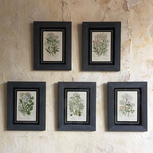 Set Of Five Framed Botanical's