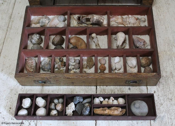 19th Century Painted Specimen Chest, With Collection