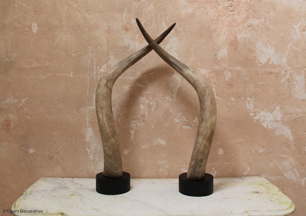 Pair of Antique Mounted Cattle Horns
