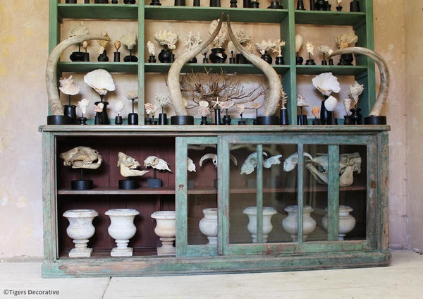 Mounted Horned Ram Skulls
