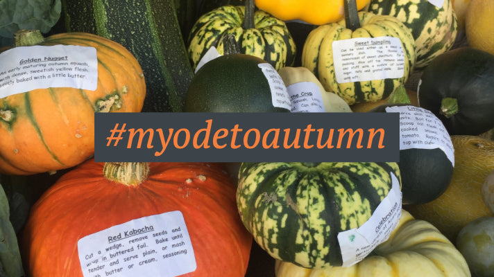 #myodetoautumn hashtag with squashes