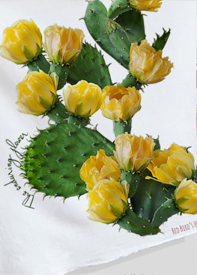 Kitchen towels with cactus flowers by Red Birds House. Gourmet size 27x27 kitchen towel.