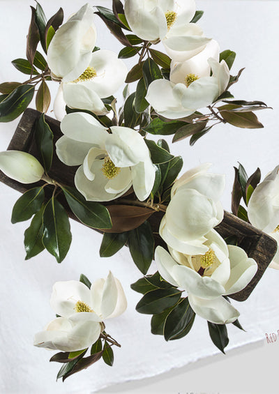 Magnolias At The Table