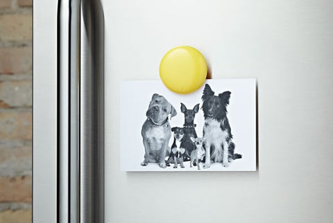 Lulalu Fridge Clip in Lemon