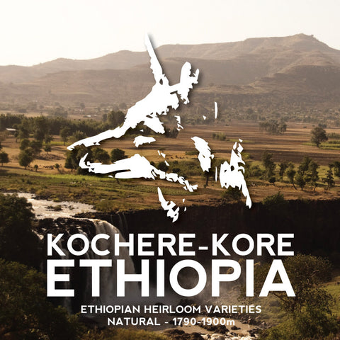 Avenue Coffee - Kochere-Kore (Ethiopia)