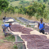 Clifton Coffee - Burundi - Kirundo Kayanza CAFEX - Natural
