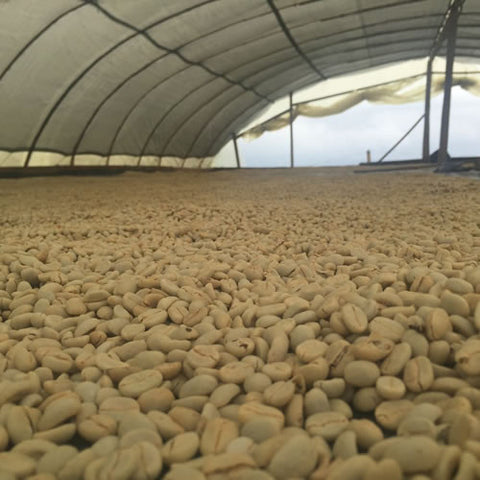 Clifton Coffee - Colombia: Luis Alejandro Ortega Lot #2