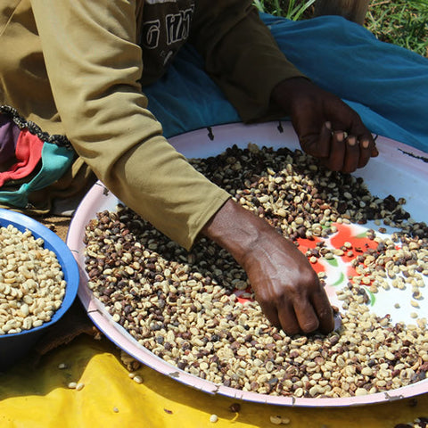 Clifton Coffee - Ethiopia: Duromina - Washed