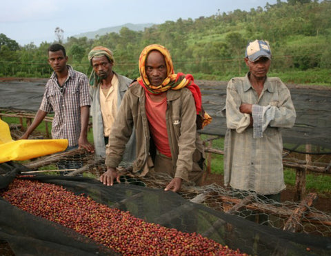 Clifton Coffee - Ethiopia: Kebel Kebado, Sidamo (Natural)
