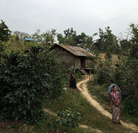 Clifton Coffee: Myanmar, Shan State, Honey