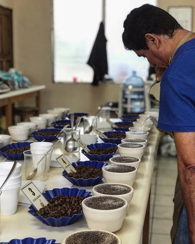 Clifton Coffee: El Salvador, Fernando Lima, Honey Process