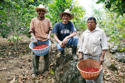 Clifton Coffee: Guatemala, El Limar, Pulped Natural