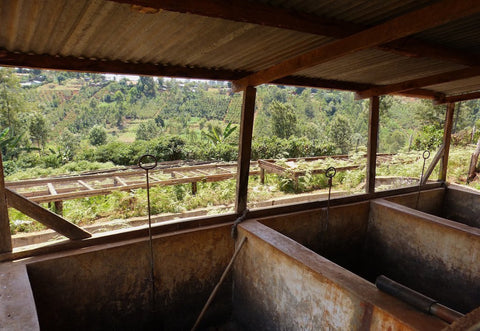 Clifton Coffee Roasters: Kenya, Tano Ndogo Farmers Group, Washed