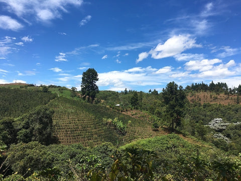 Clifton Coffee: Peru, Dios Te De, Washed