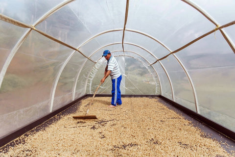 Clifton Coffee Roasters: Colombia, Finca El Rosal, Extended fermentation