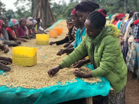 Clifton Coffee Roasters: Ethiopia, Chire, Washed