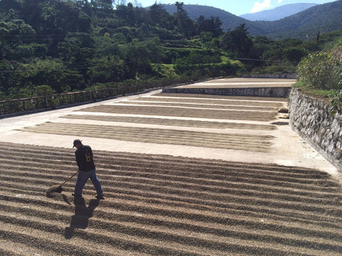 Dear Green Coffee - El Salvador: San Francisco 'Loma Linda'