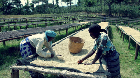 Horsham Coffee Roaster - Rwanda Gishamwana Island alternate image 1