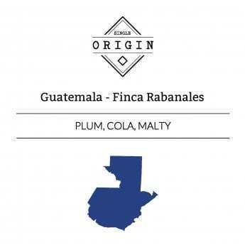 Rounton Coffee Roasters: Guatemala, Finca Rabanales, Pulped Natural