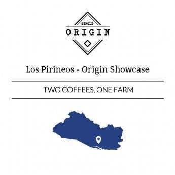 Rounton Coffee Roasters: Origin Showcase - 2 coffees: El Salvador, Los Pirineos, Natural