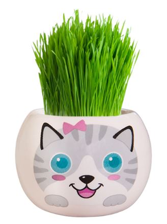 Grass Hair Kits - Kittens