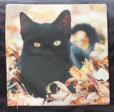 black cat in leaves