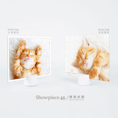Puzzle de Doble Cara Pintoo - Kitten´s Napping Time. 48 piezas