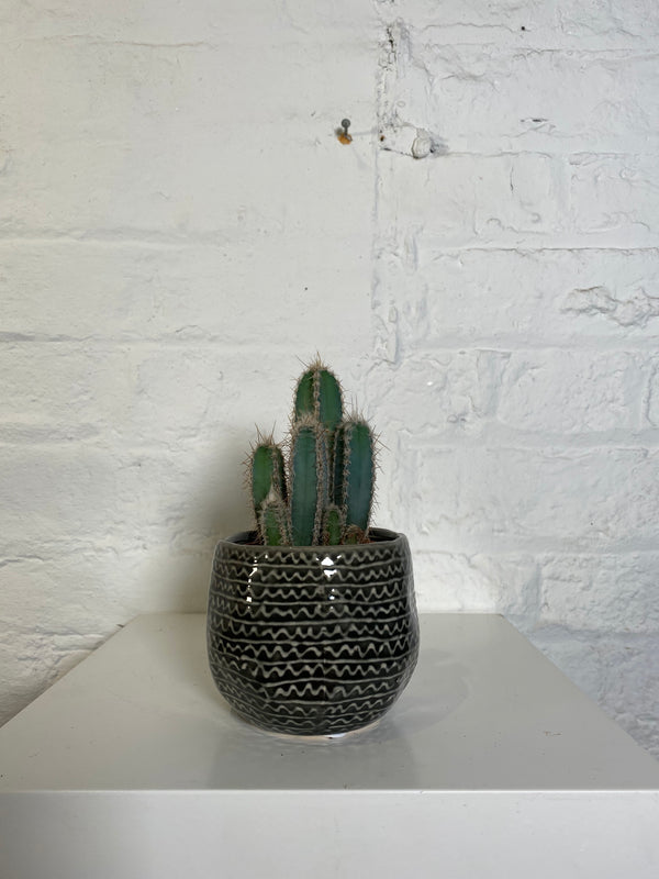 Cactus in decorative pot (Cactus in decorative pot)
