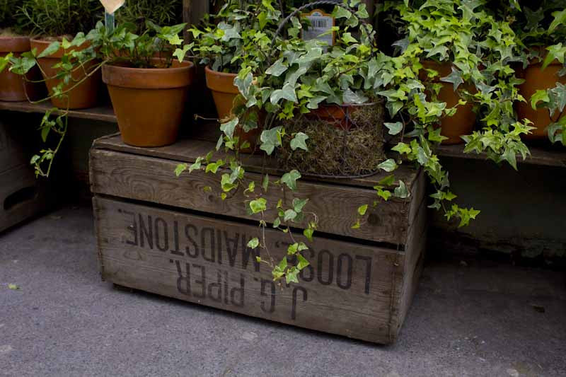 Potted ivy on wooden crate