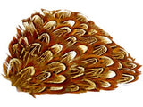 Pheasant Feather Clip