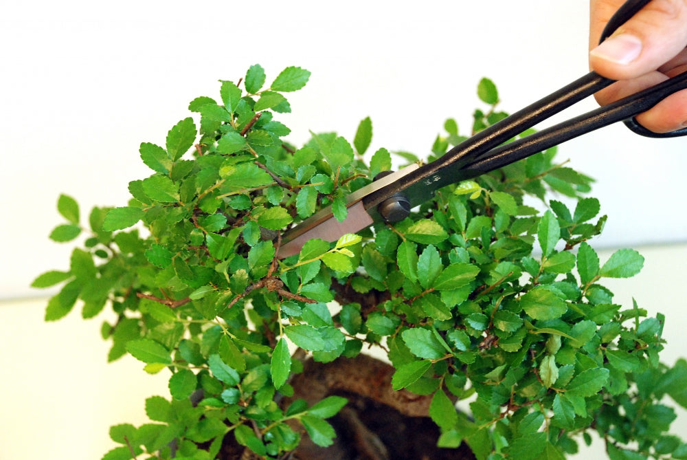 Okatsune 206 Light Precision Bonsai Scissors