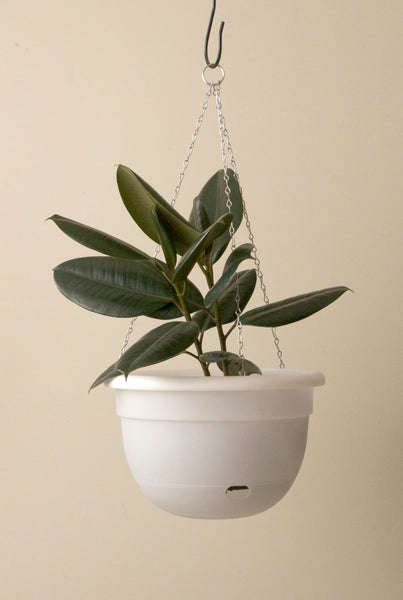 Mr Kitly x Decor Selfwatering Hanging Pot