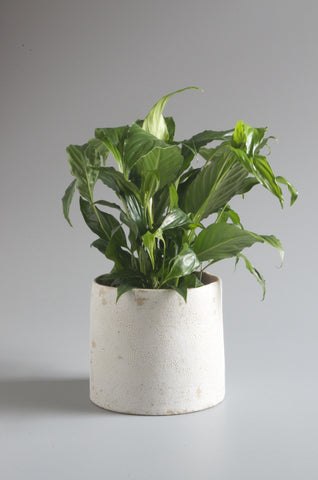 Sharon Alpren White Crackle Planter - Medium