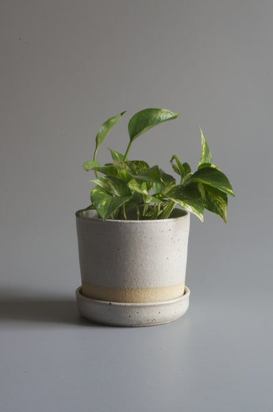 Wingnut & Co Planter - XL