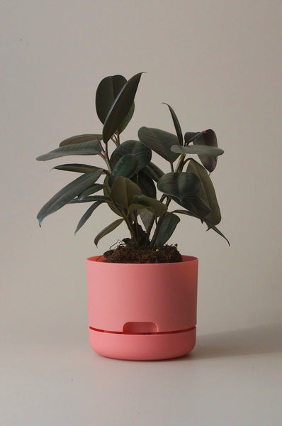 Mr Kitly x Decor Selfwatering Plant Pot 170mm