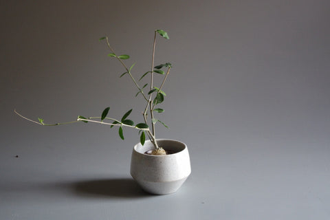 Tara Shackell Rock Planter - Small