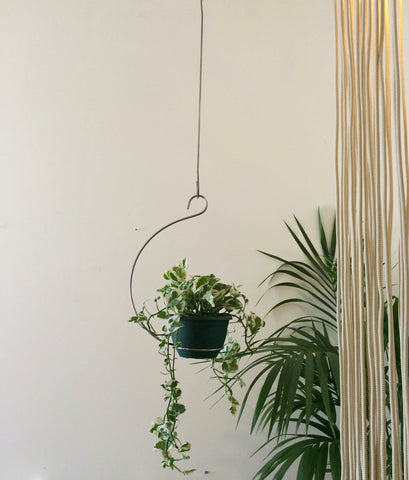 Mr Kitly Curved Ceiling Plant Hanger