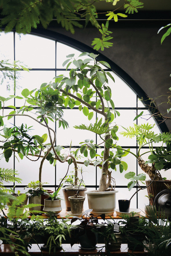 Indoor green living with plants mr kitly for Indoor green plants images