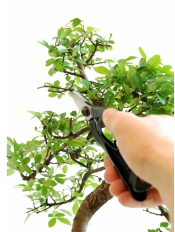 Okatsune 207 Bonsai Thinning Shears