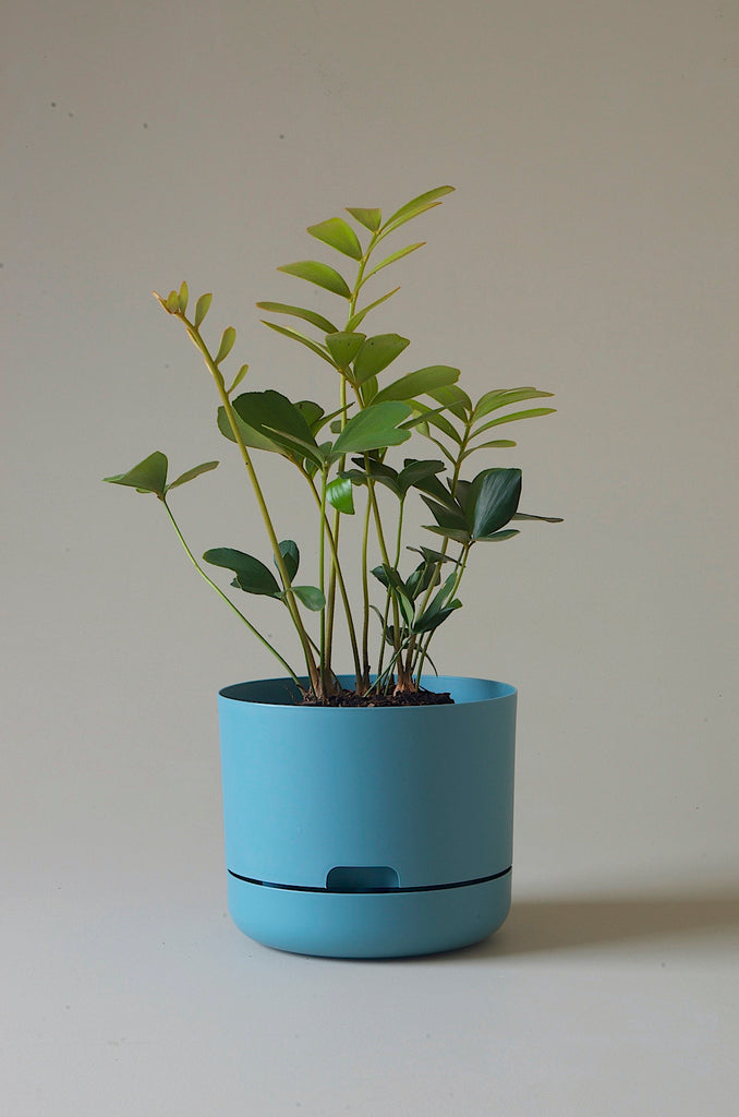 Mr Kitly x Decor Selfwatering Plant Pot 215mm