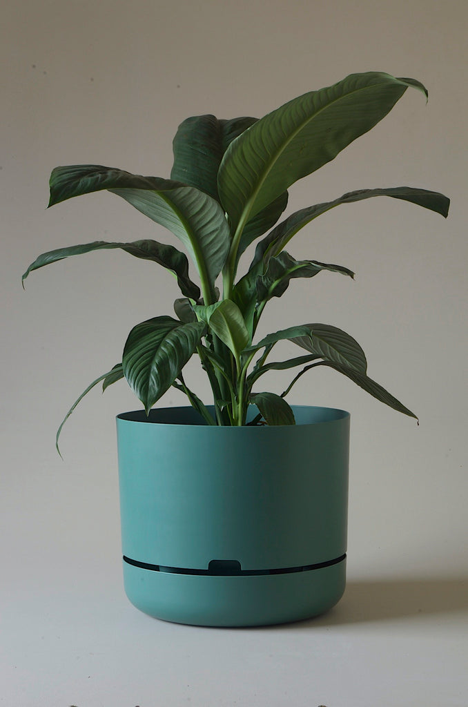 Mr Kitly x Decor Selfwatering Plant Pot 375mm
