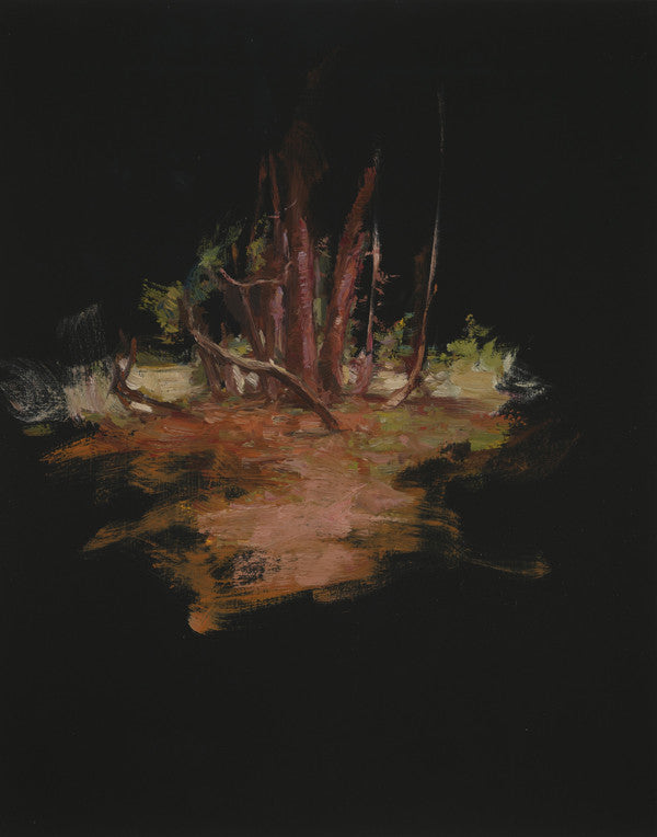 Paul Williams, Pines, 2009, 35cm x 29cm, oil on board