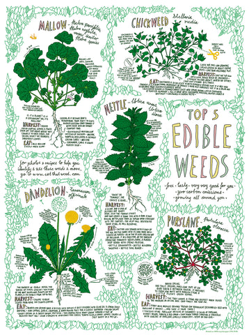 Top 5 Edible Weeds Poster