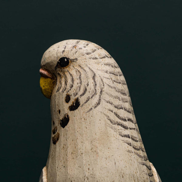GRAY & WHITE BUDGERIGARR