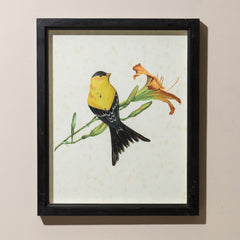FRAMED AMERICAN GOLD FINCH WITH GLASS